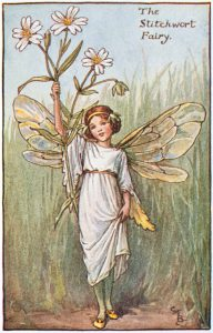 Illustration for the Stitchwort Fairy from Flower Fairies of the Spring. A girl fairy stands facing front holding a stitchwort flower in her right hand. Her left hand is holding up the hem of her long dress.  300.1.14 FF Spring 14 1923