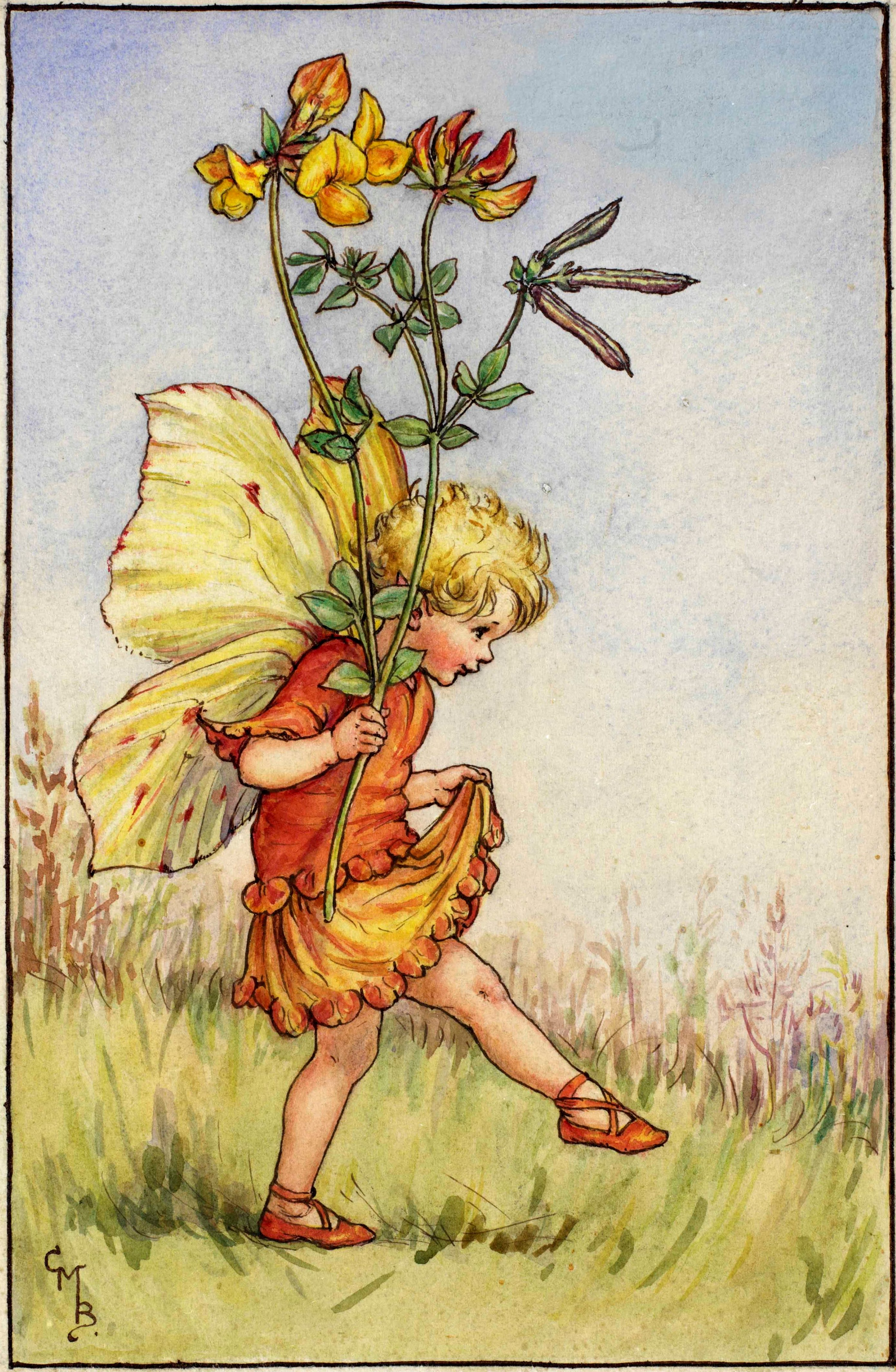 The Bird's Foot Trefoil Fairy Flower Fairies