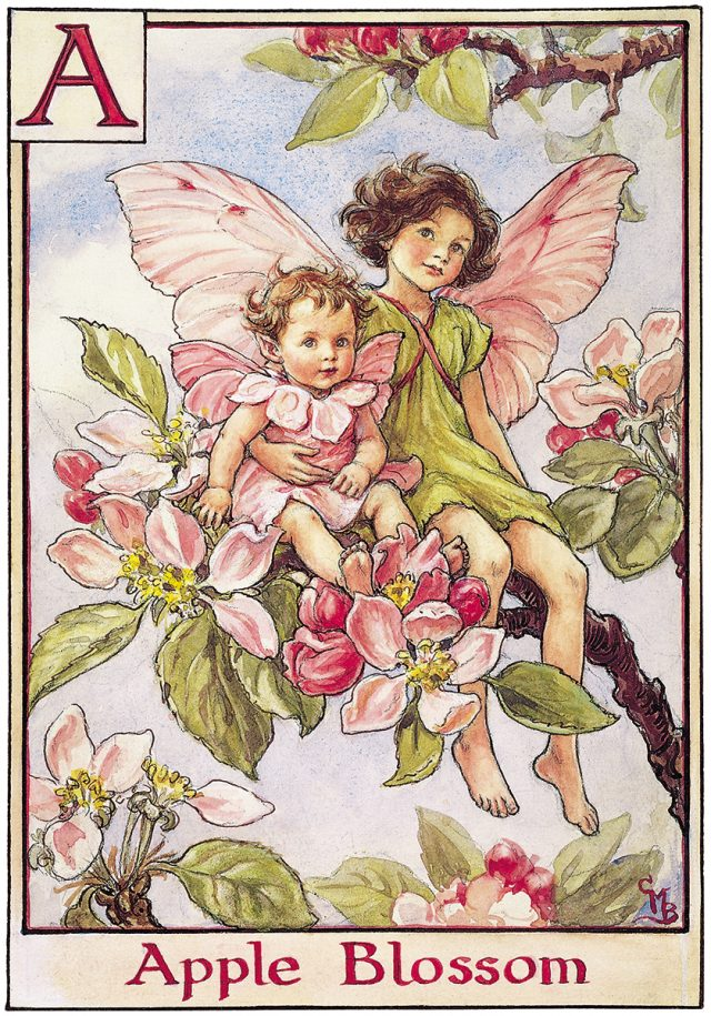 fairy i