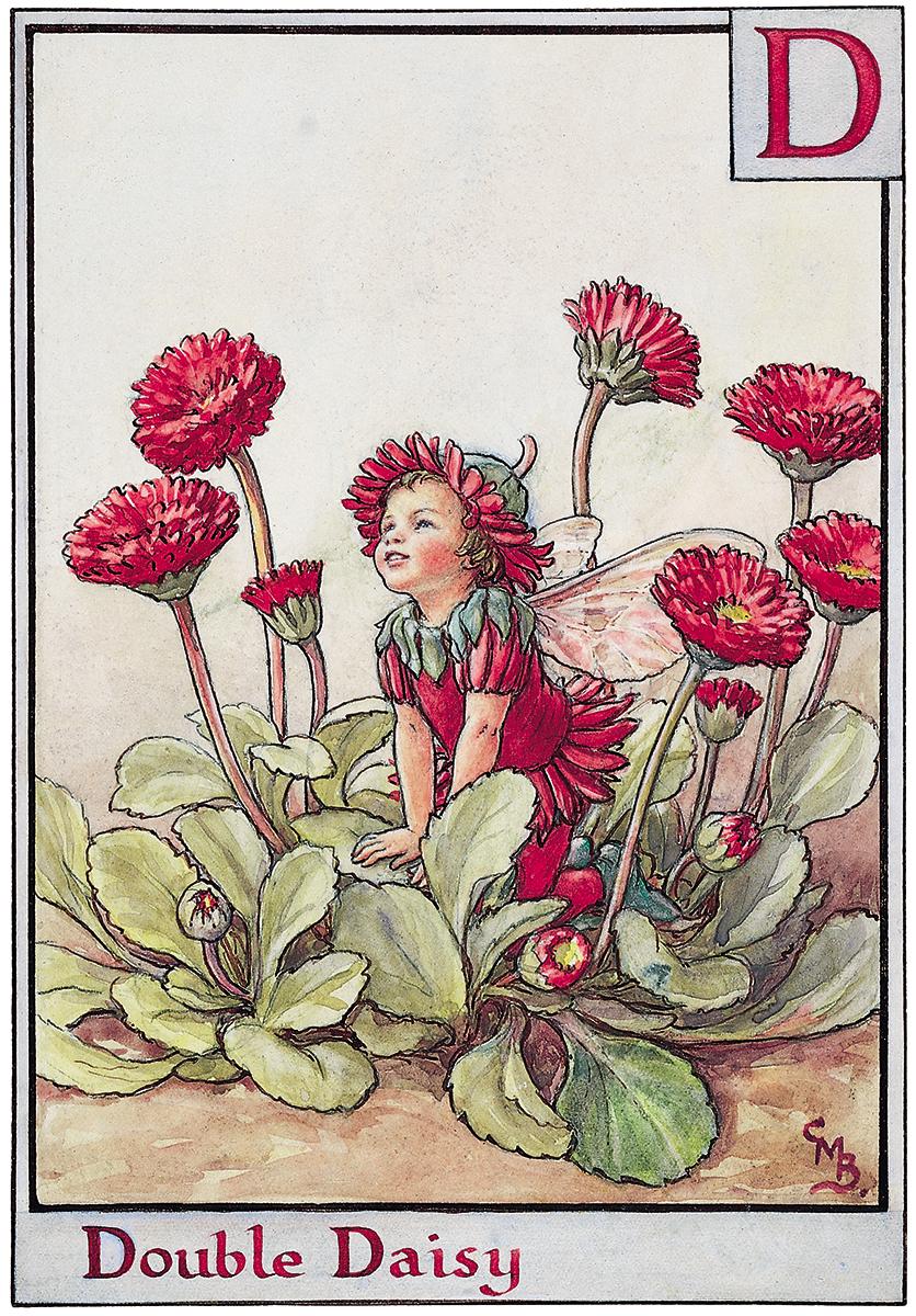 Double daisy fairy flower fairies double daisy fairy izmirmasajfo Image collections