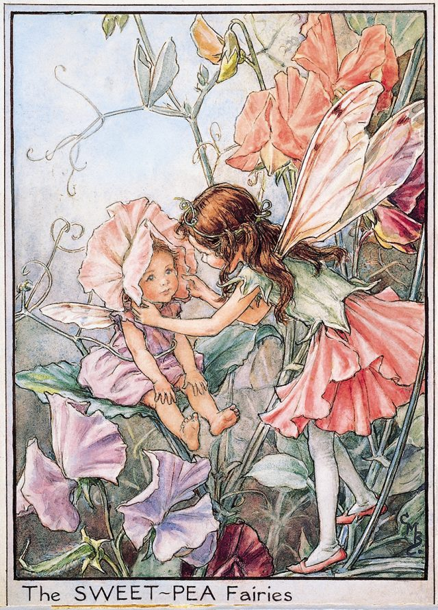 Meet The Fairies - Flower Fairies