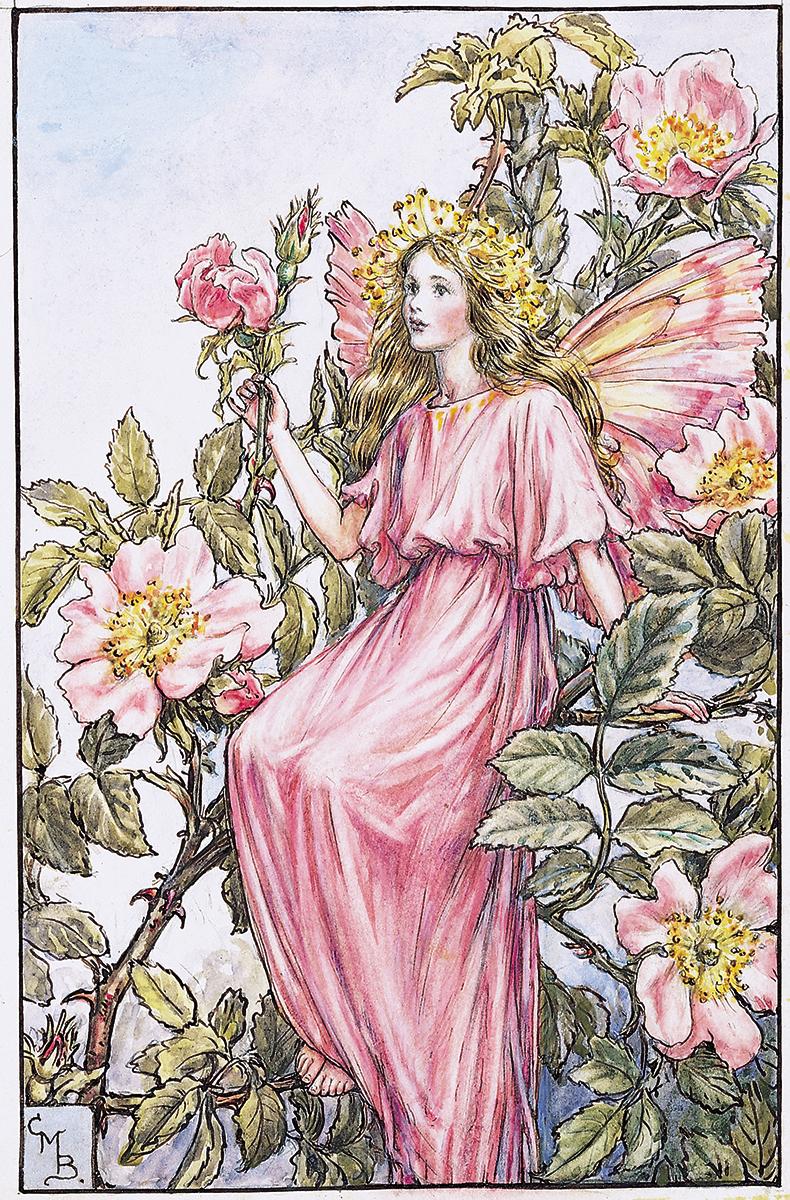 The Wild Rose Fairy Flower Fairies