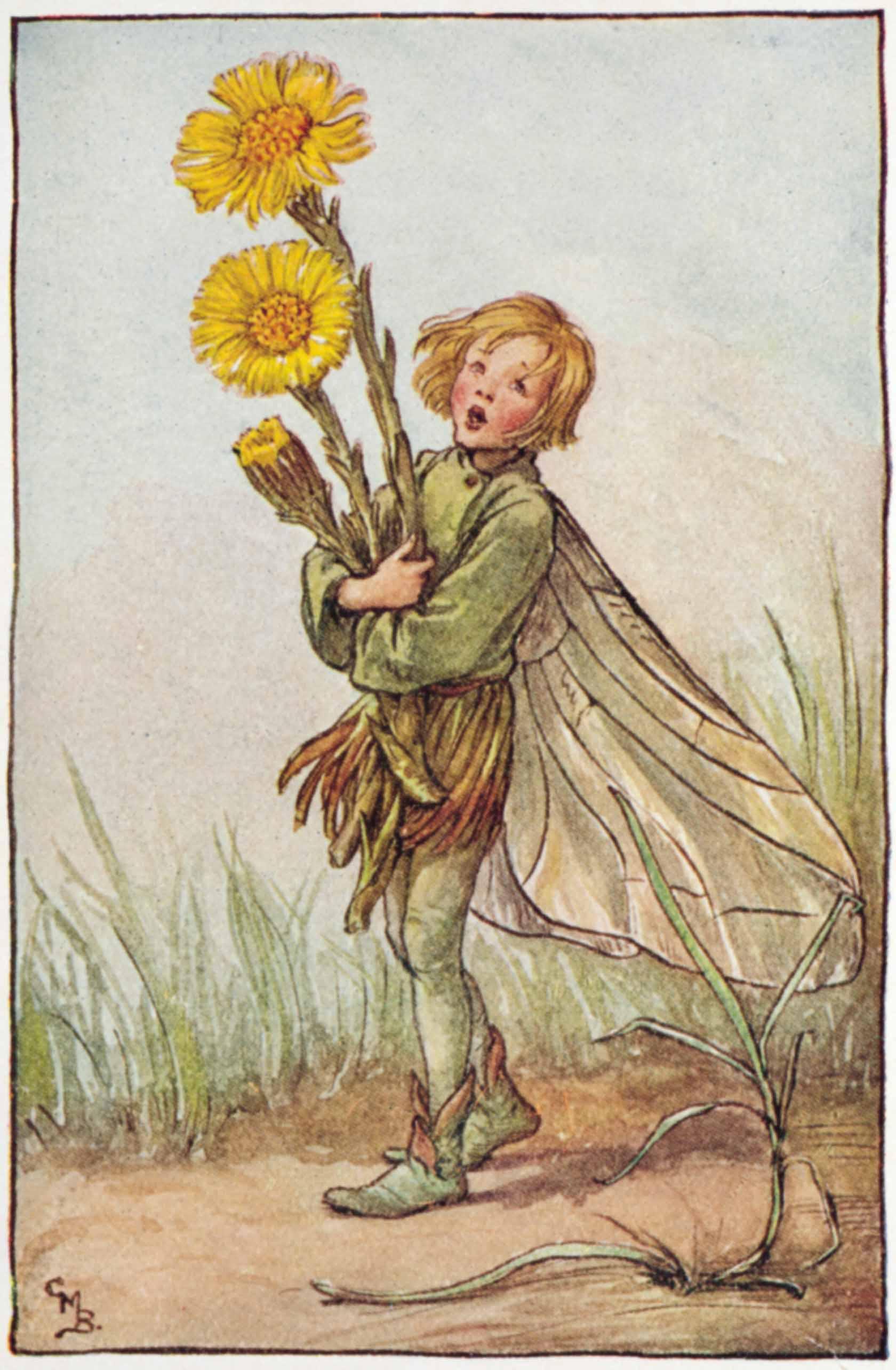 Colt's Foot Flower Fairies