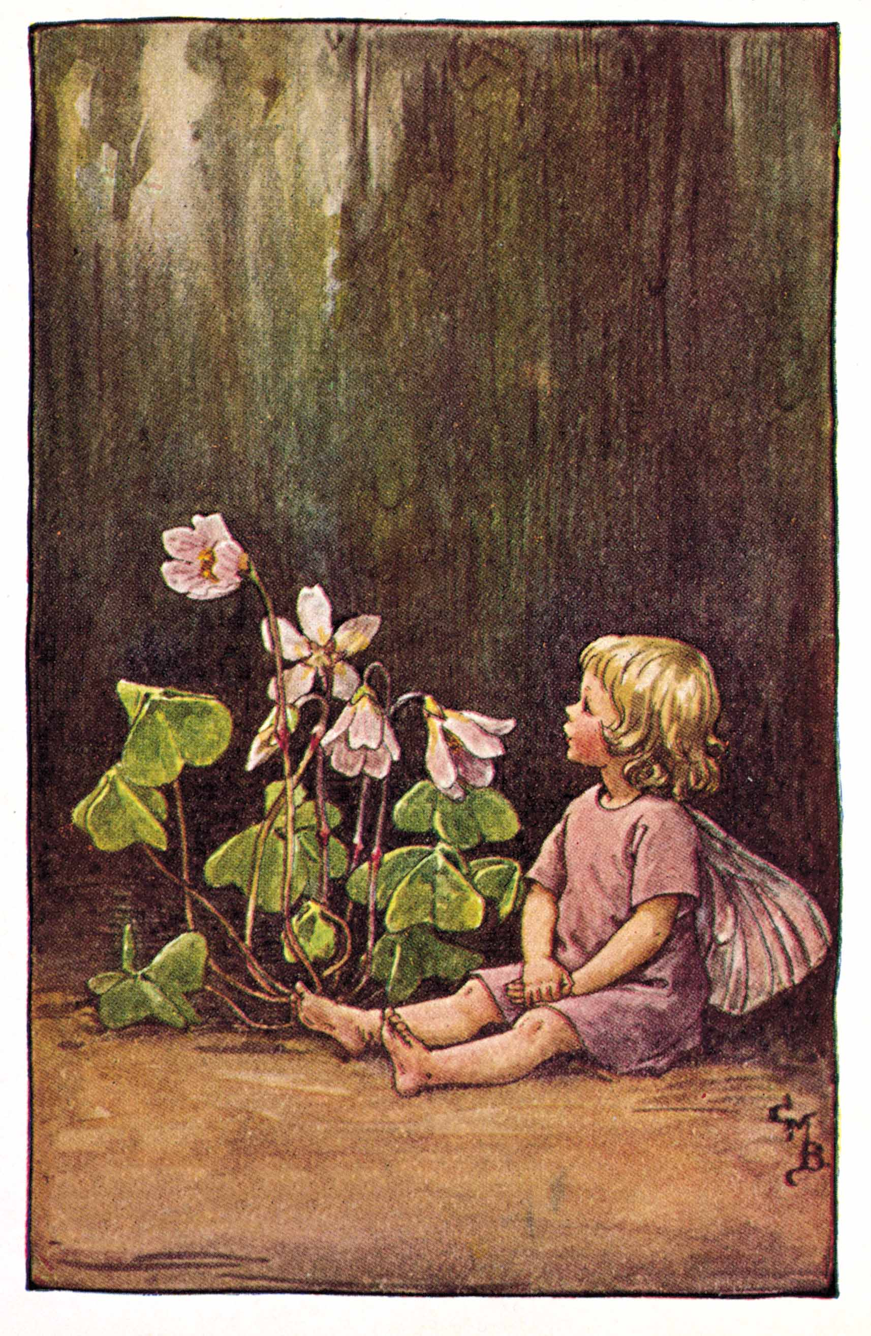 Wood-Sorrel Flower Fairies