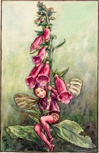 Foxglove flower fairies