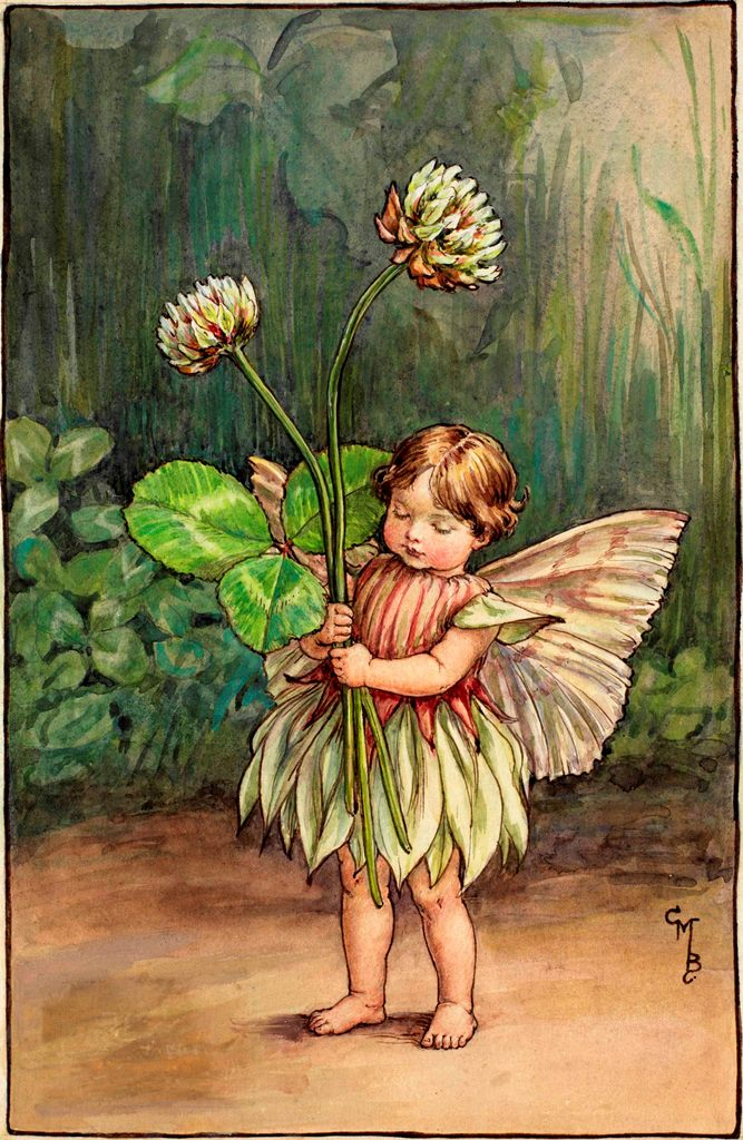 White clover flower fairies