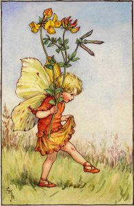 Bird's-foot trefoil flower fairies