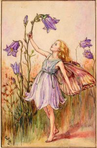 Harebell flower fairies