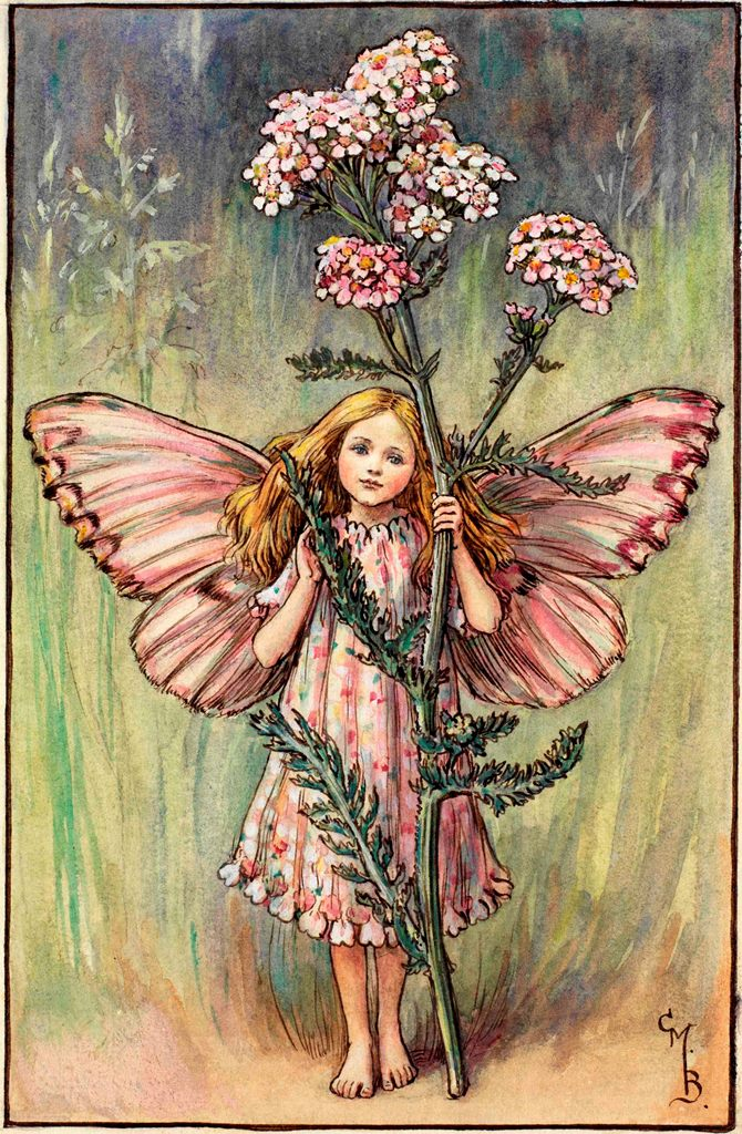 Yarrow flower fairies