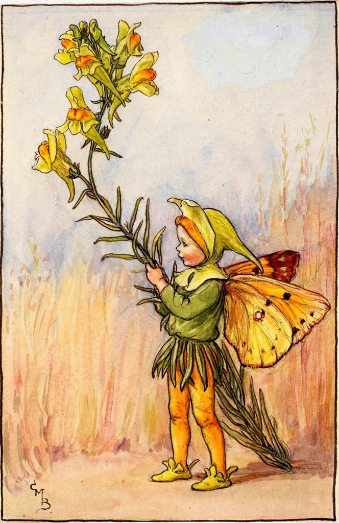 Toadflax flower fairies