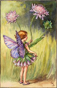Scabious flower fairies