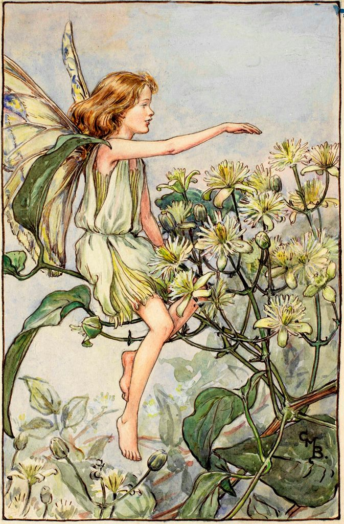 Traveller's joy flower fairies