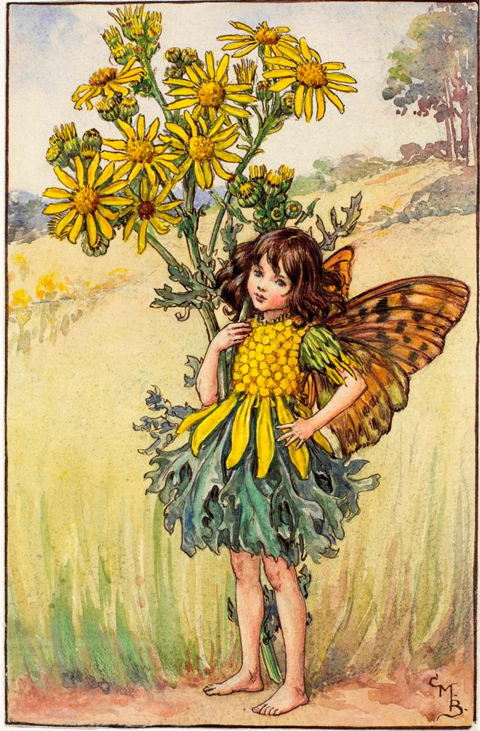 Ragwort flower fairies