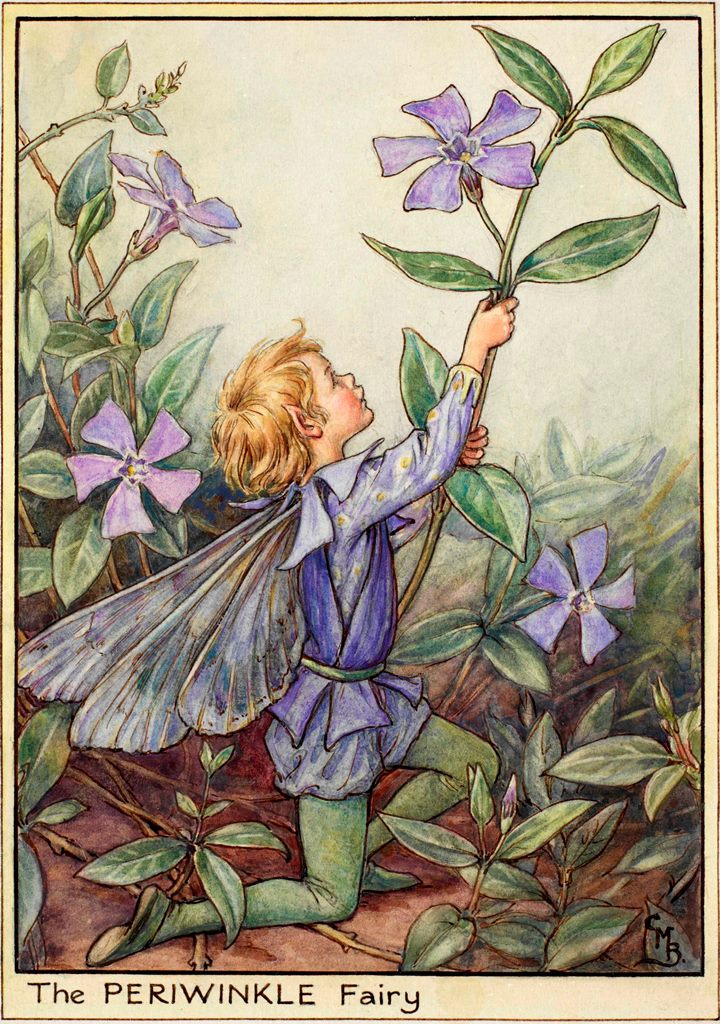 Periwinkle flower fairies