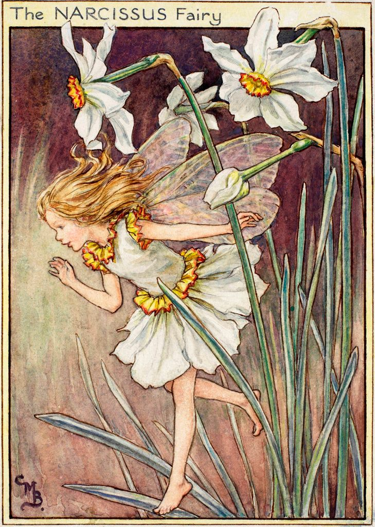 Narcissus flower fairy
