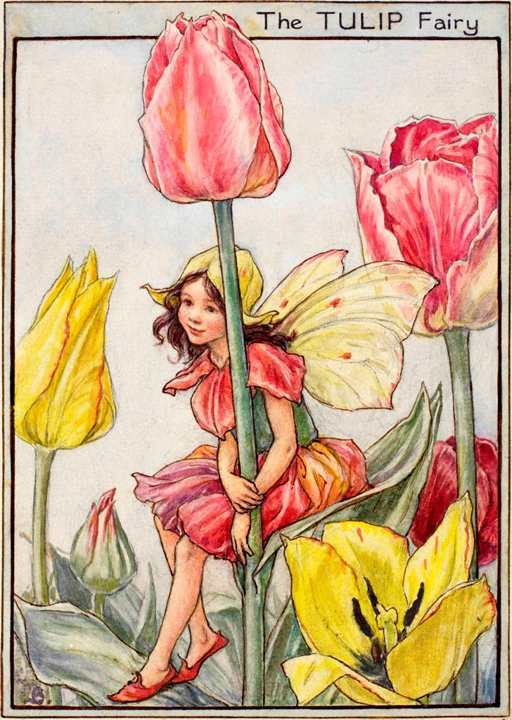 The Tulip Fairy flower fairies