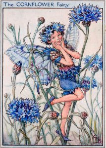 Cornflower flower fairies