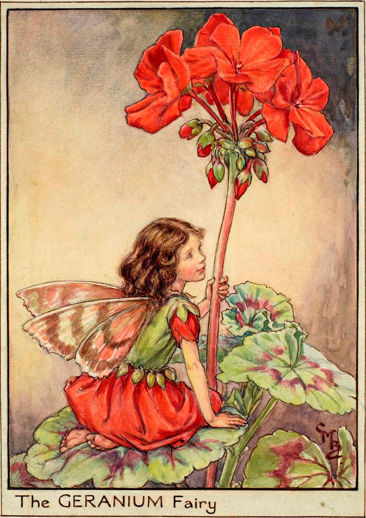 Geranium flower fairy