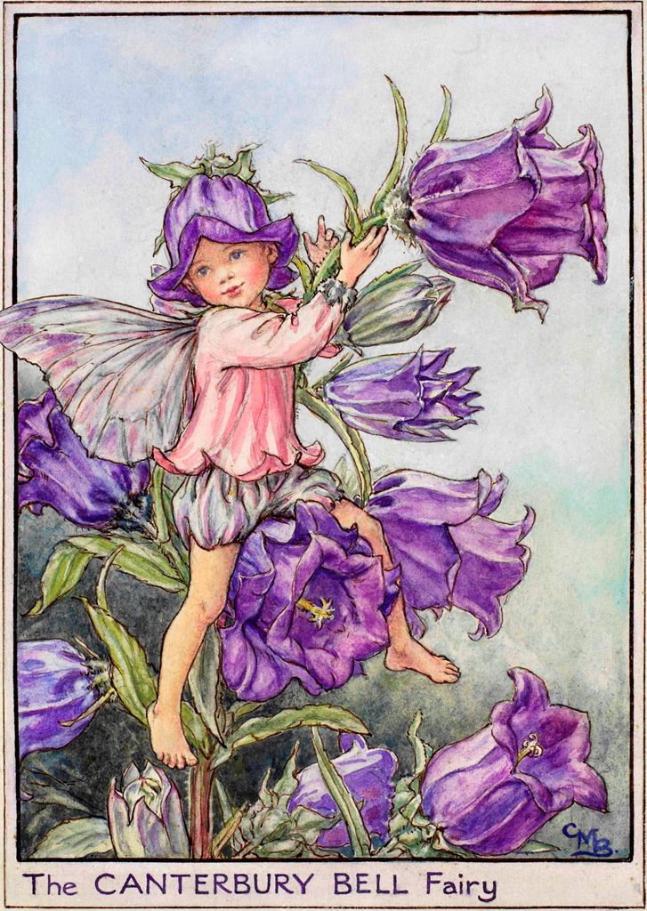 Canterbury bell flower fairy