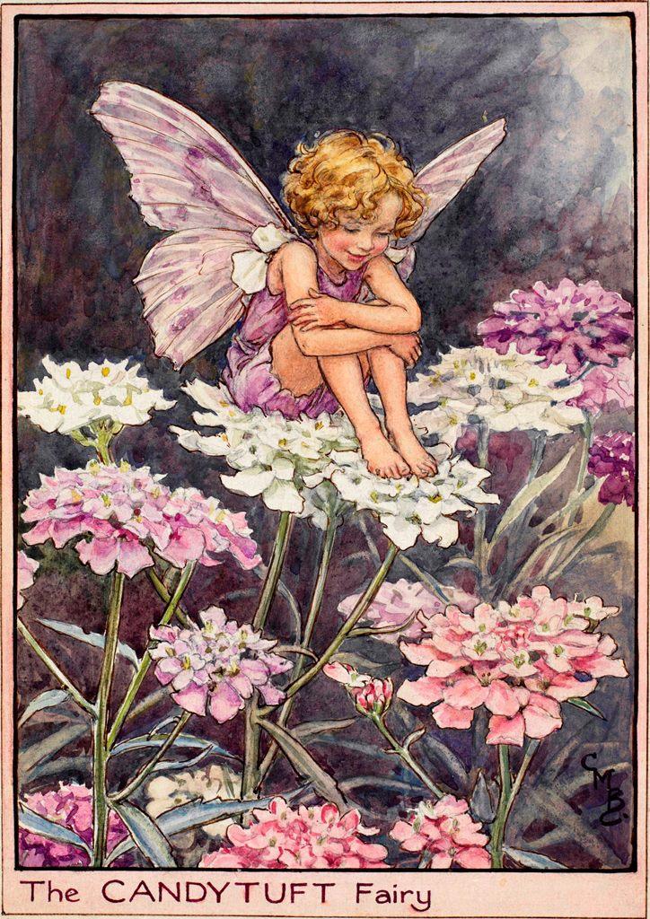 The fairies of the garden archives flower fairies candytuft flower fairies mightylinksfo