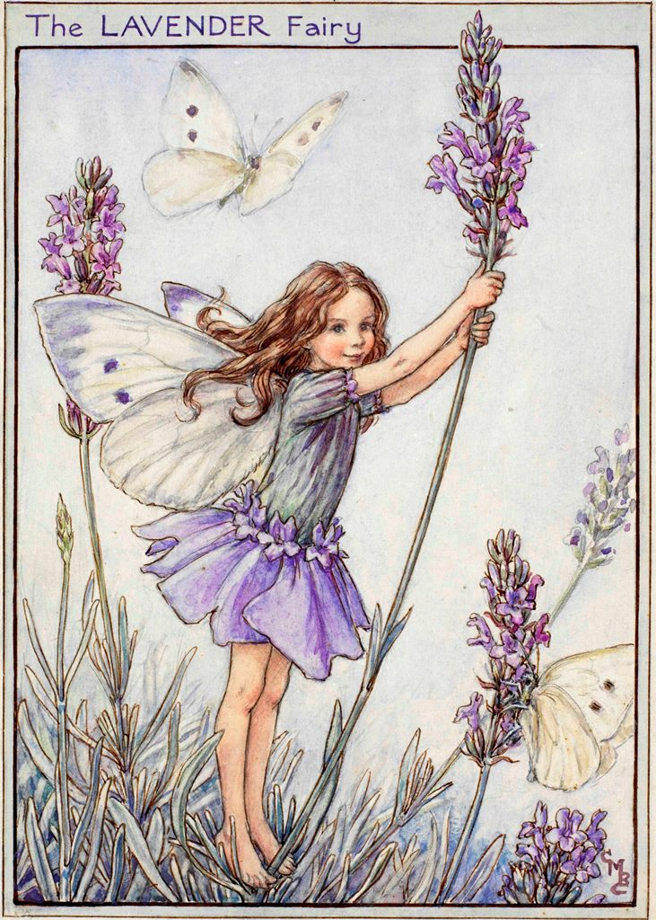 Lavender flower fairies