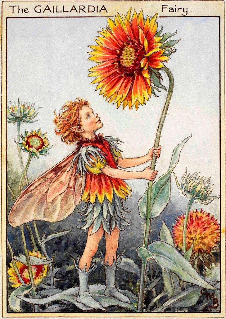 Gaillardia flower fairies