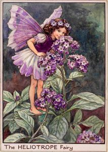 Heliotrope flower fairies