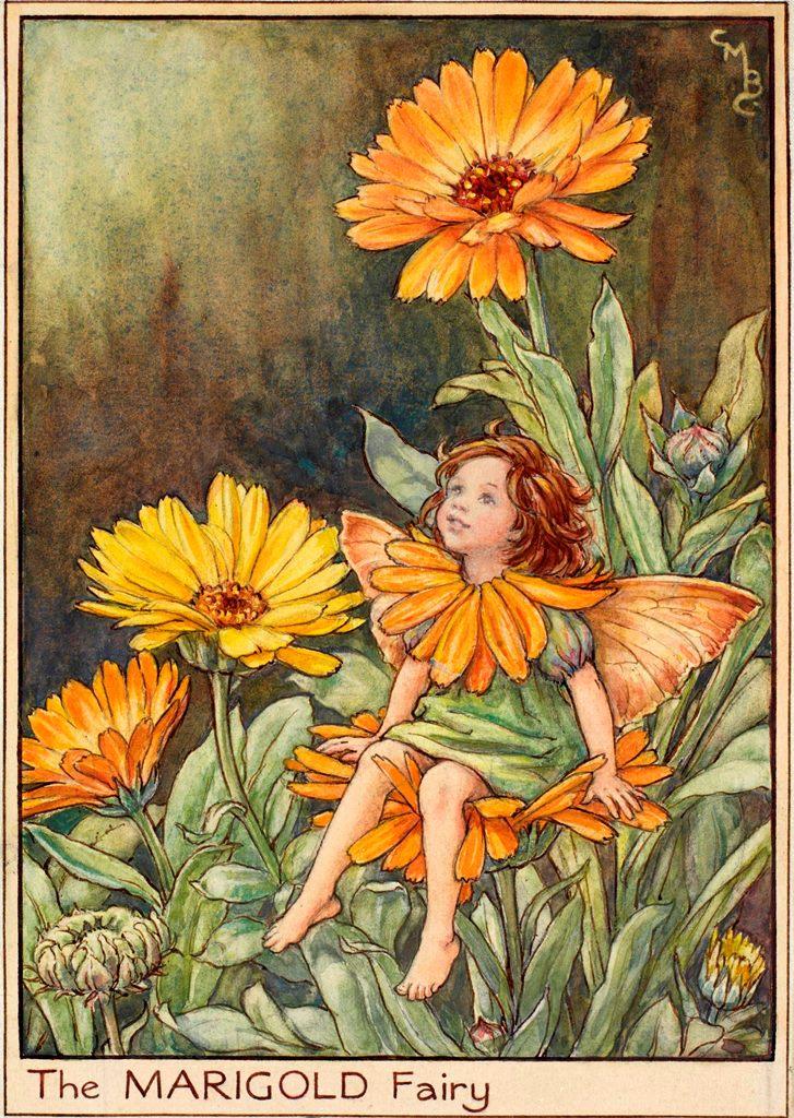 Marigold flower fairies