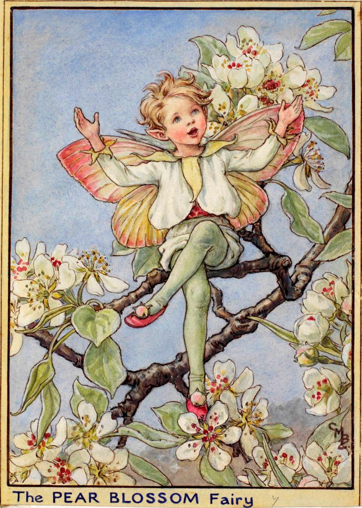 Pear tree flower fairy