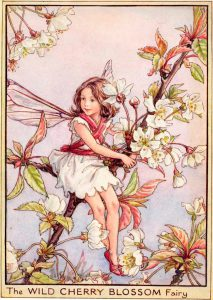 Wild Cherry Blossom flower fairy