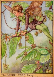 Beech Tree flower fairy