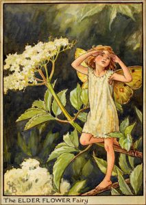 Elder flower fairy