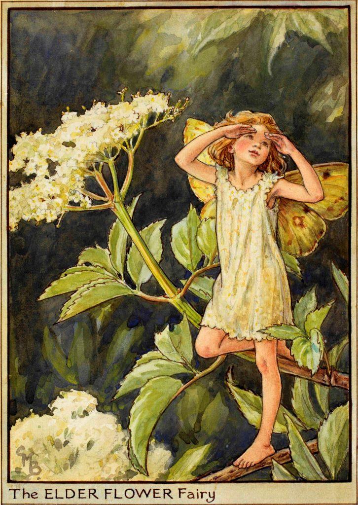 Elder flower fairy