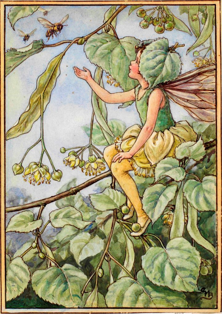 Lime tree flower fairy