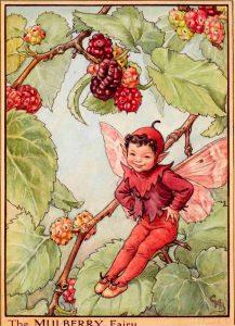 Mulberry flower fairy