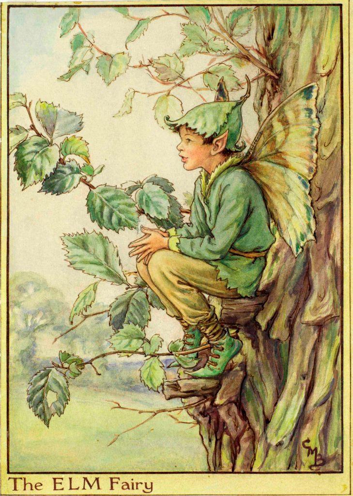 Elm Tree flower fairy