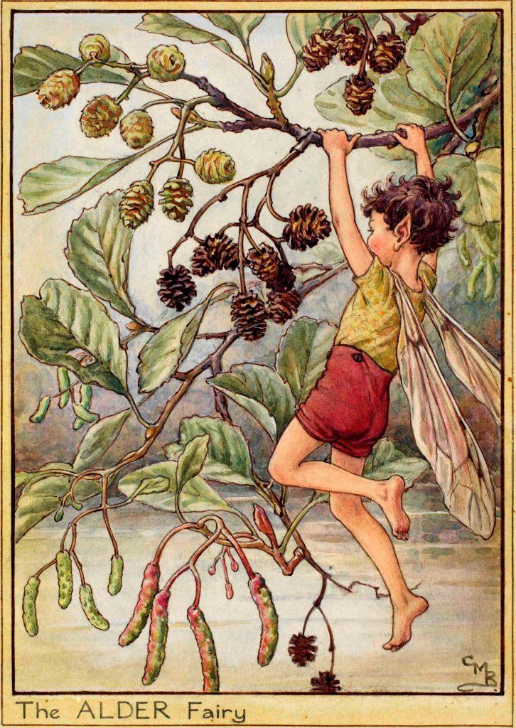 Alder flower fairy