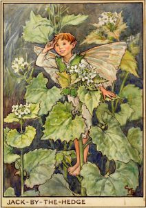 Jack by the hedge flower fairies