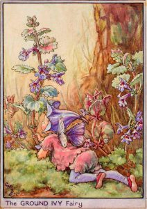 Ground ivy flower fairies