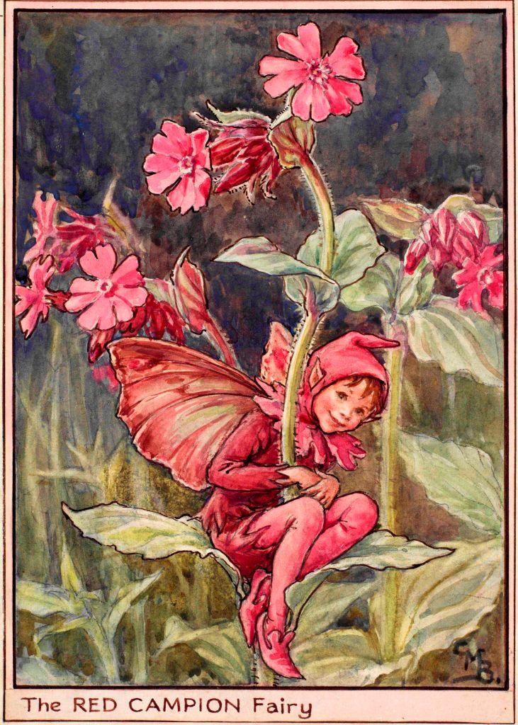 Red Campion flower fairies
