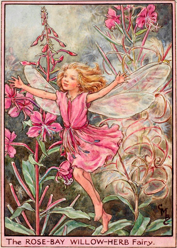 Rose bay willow herb flower fairy
