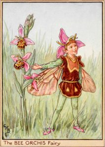Bee orchis flower fairies