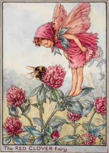 Red Clover flower fairy