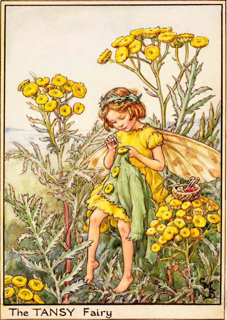 Tansy flower fairy