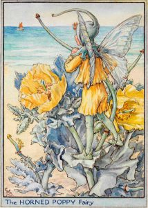 Horned poppy flower fairies