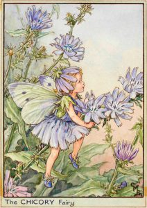 Chicory flower fairy