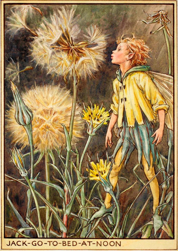 Jack go to bed at noon flower fairy