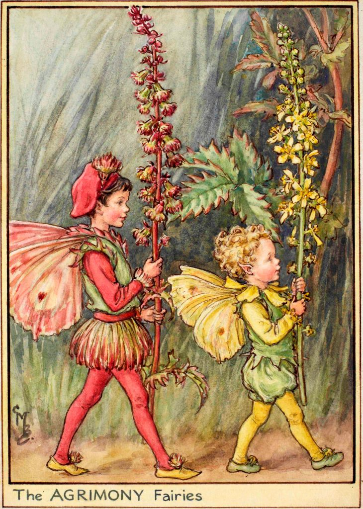 Agrimony fairies flower fairies