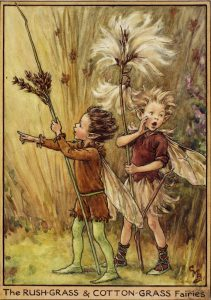 Rush-grass and cotton-grass flower fairies