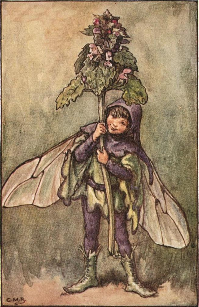 Dead nettle flower fairy